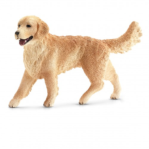 GOLDEN RETRIEVER FEMELLA